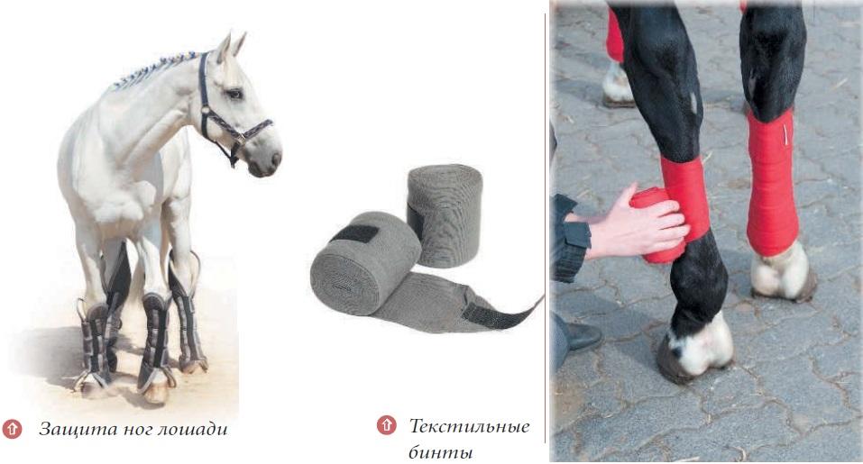 Ногавки для защиты связок и сухожилий и суставов для лошади артрит челюстно-лицевого сустава симптомы