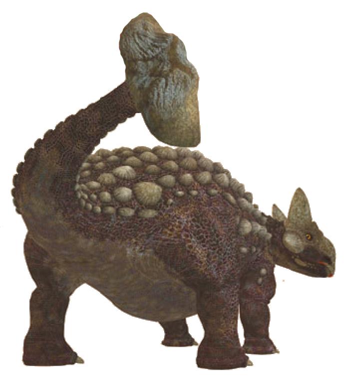 Анкилозавр и хвост-булава