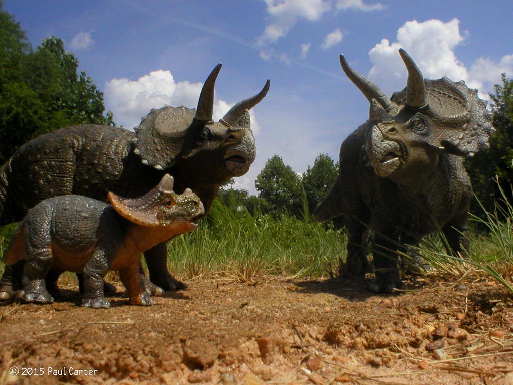 Трицератопс: описание динозавра с картинками