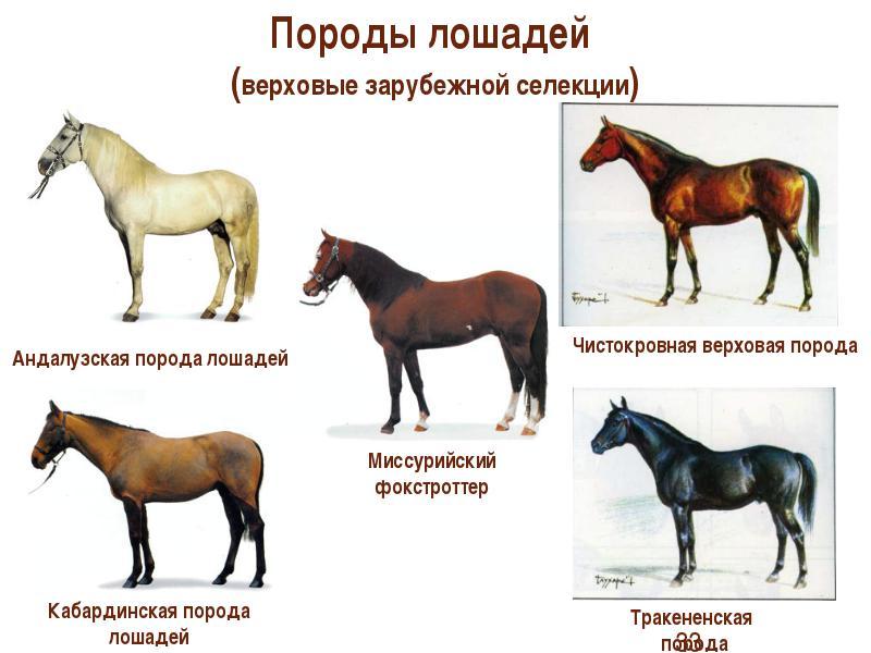 этих породы лошадей фото с названиями по алфавиту нежно массируют клиторы