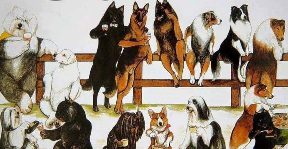 Особенности классификации пород собак Fci (5-10 группы)
