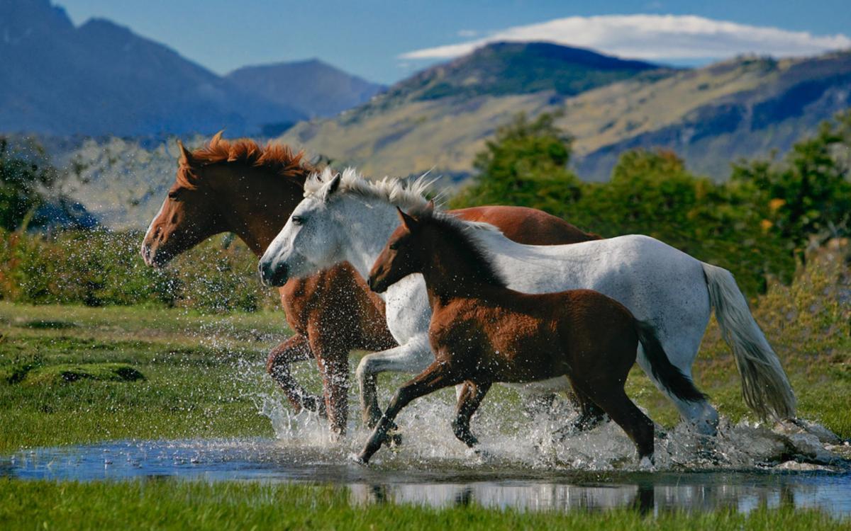 Три разные лошади. Какую купить?