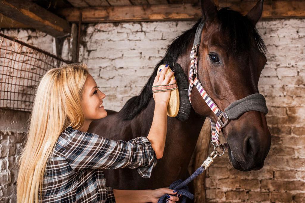 Чистка, мытье и стрижка лошади. Щетки и машинки для стрижки лошадей