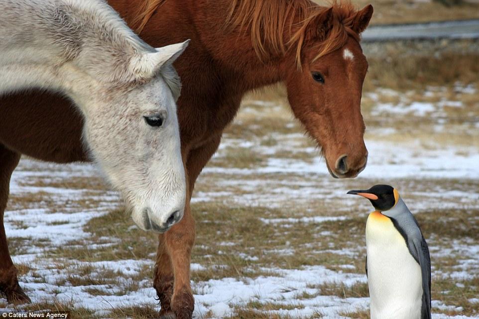 Органы чувств лошади: зрение, слух, обоняние, осязание, ощущение вкуса