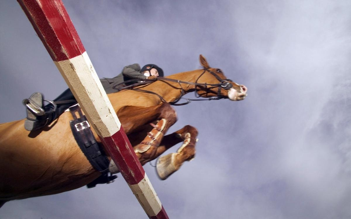 Наездник на спортивной лошади