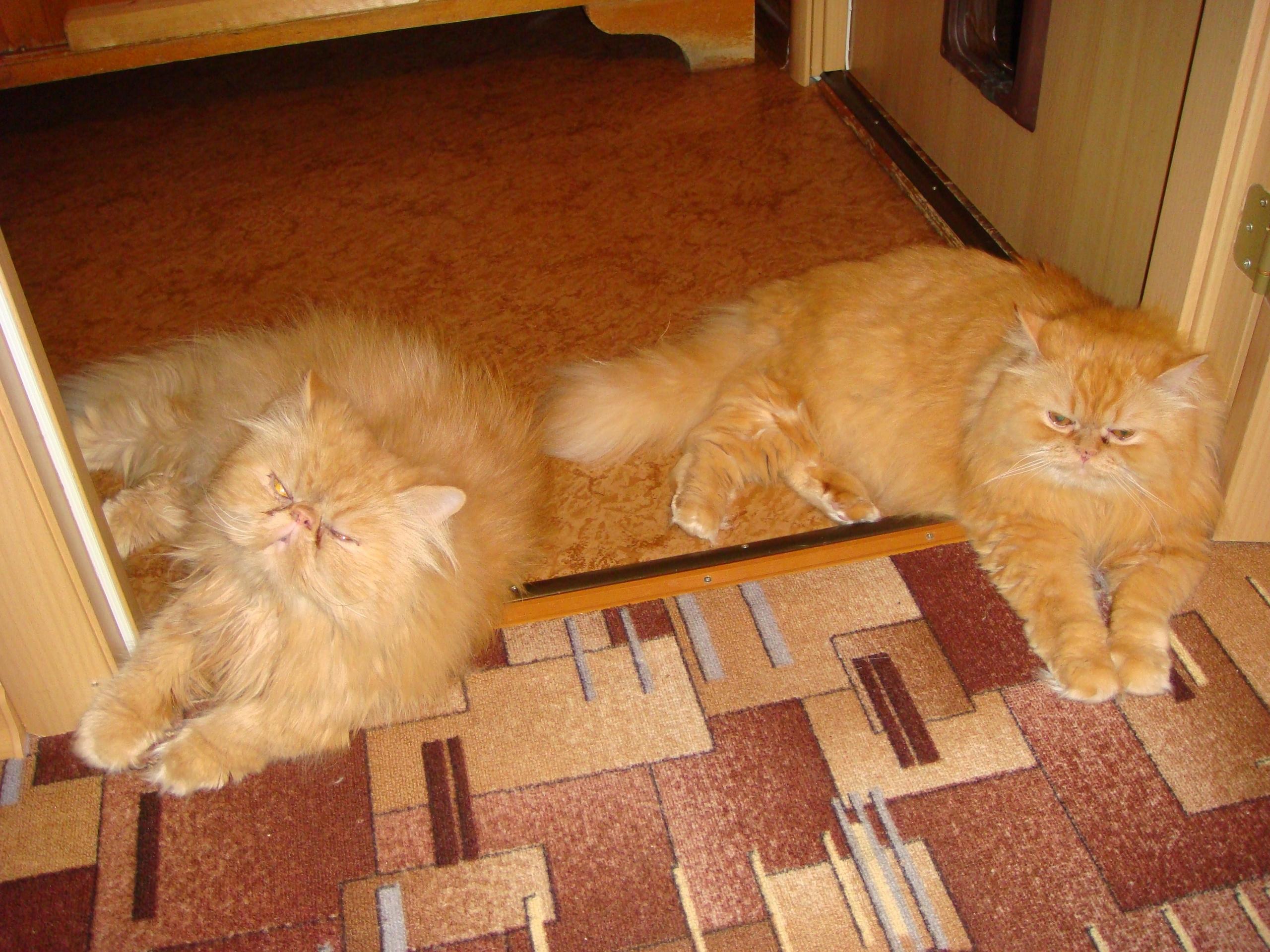 Как найти общий язык с котом и наладить гармоничное соседство