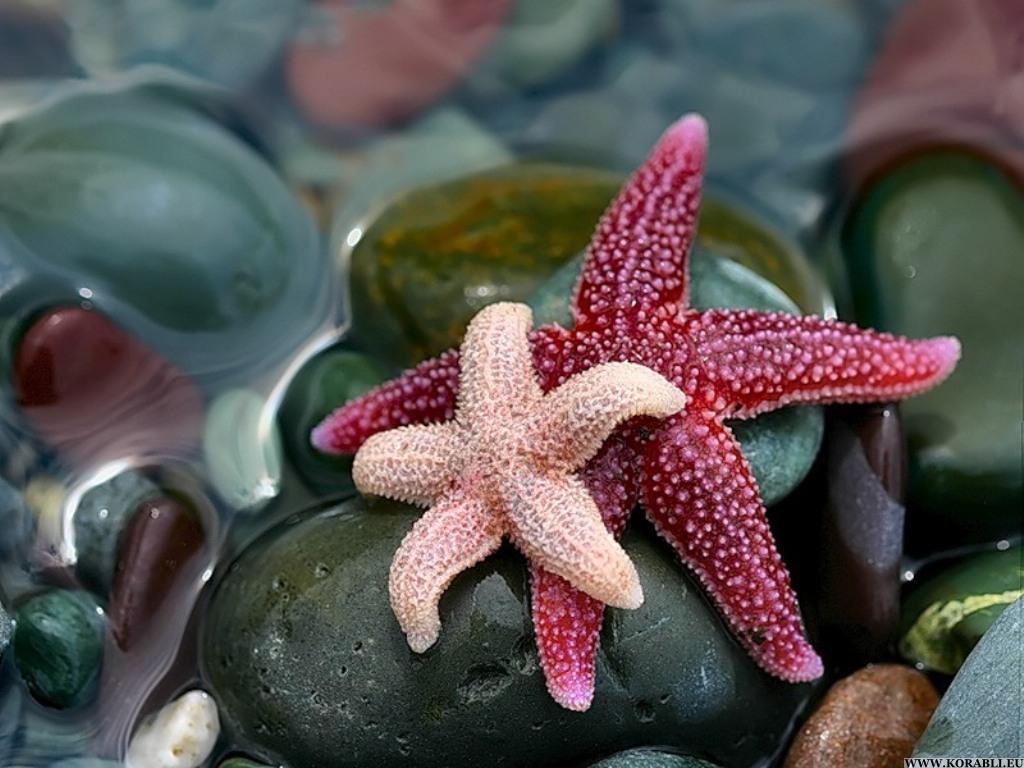 Морские звезды - животные, поражающие своей красотой