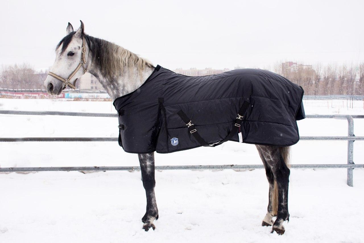 Амуниция лошади