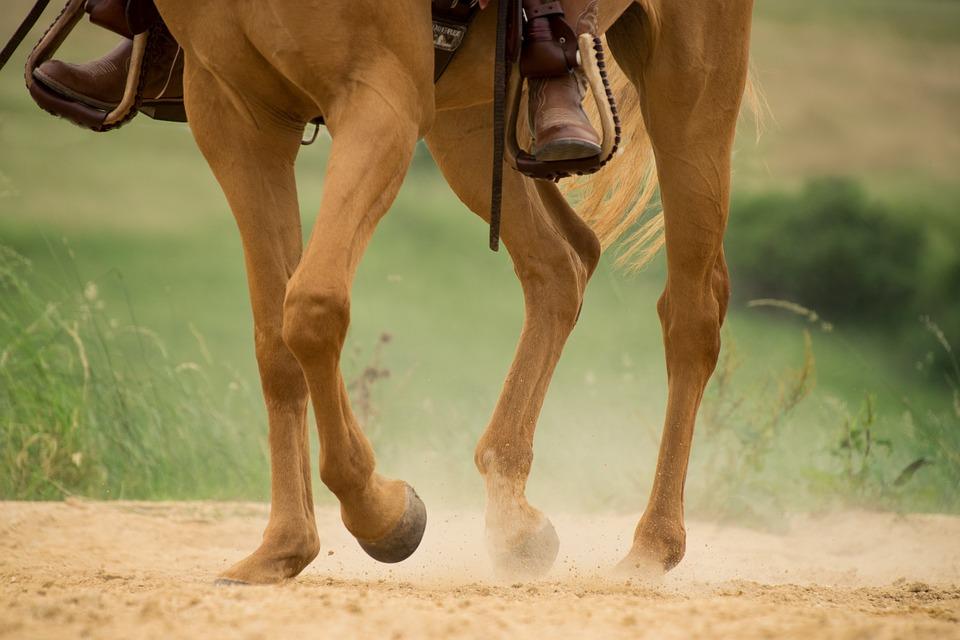 Конечности лошади. Особенности и пороки экстерьера и строения ног