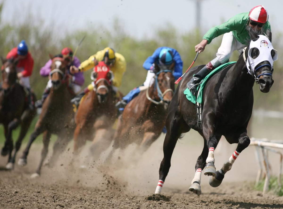 Скачки и бега лошадей