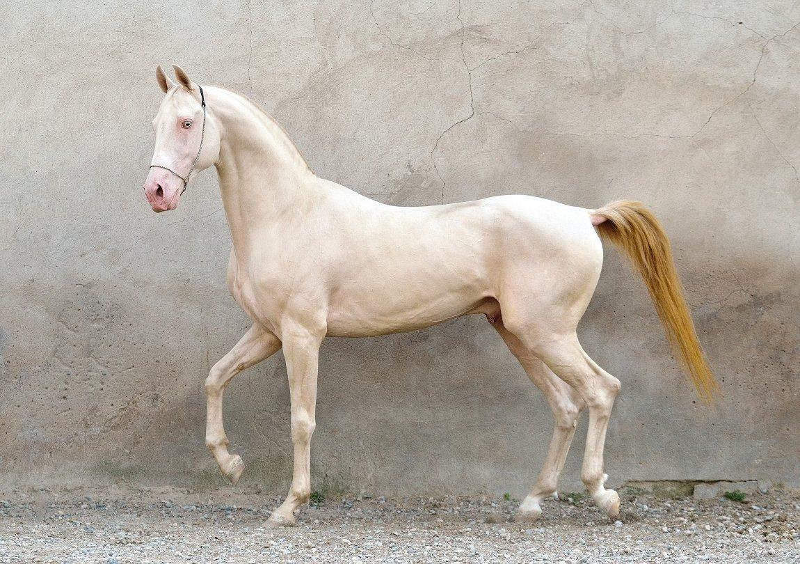 Производные масти лошадей