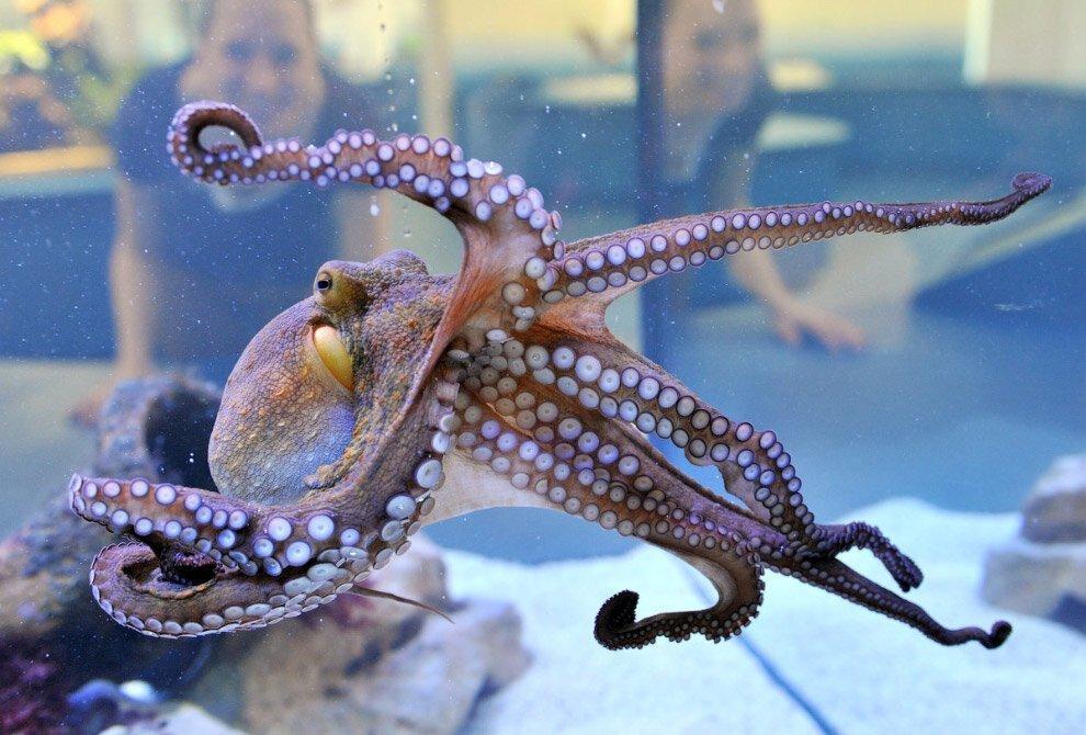 Интересные факты про осьминогов