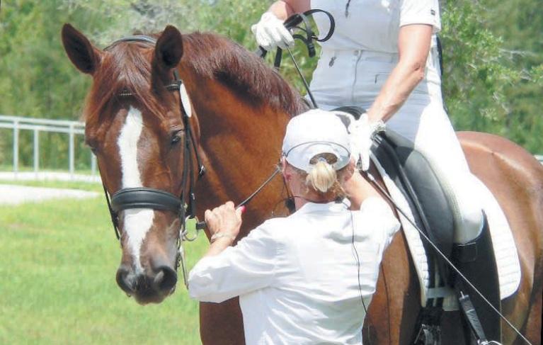 Снаряжение для управления лошадью. Экипировка и средства для тренировок