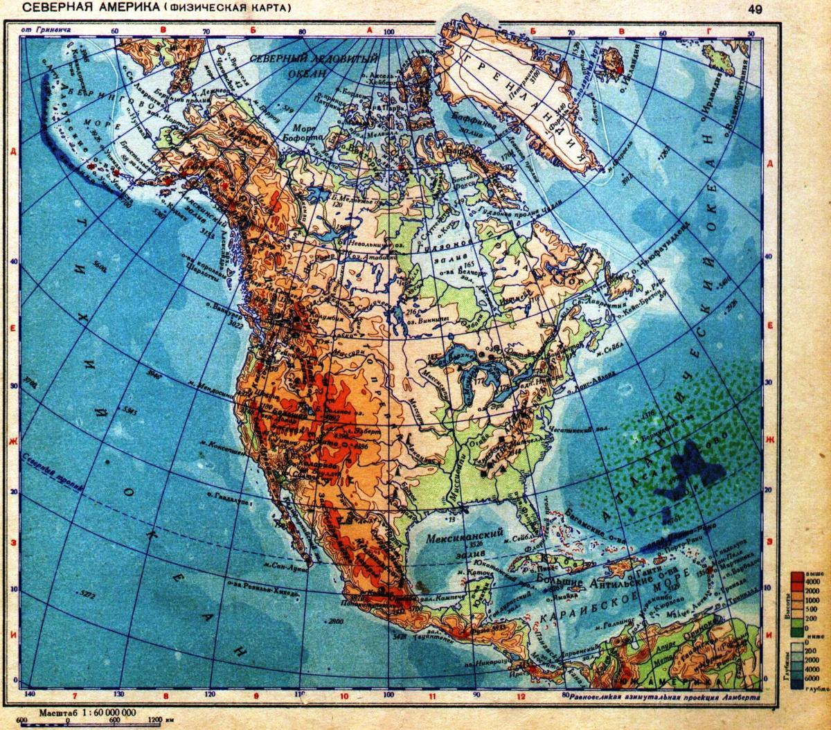 Место происхождения лошадей - Северная Америка