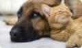 Как ухаживать за домом, в котором есть домашние животные?