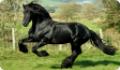 Контроль состояния лошади в конюшне