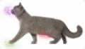 5 способов, которые помогут «воспитать» спокойную кошку