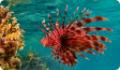 Рыбы - костные и хрящевые виды животных. Обитатели озер, рек и морей