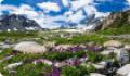 Растительный и животный мир северо-восточной Гренландии