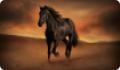 Лошадь, скачущая по пустыне