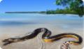 Яд морских змей. Пеламида