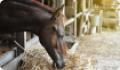 Кормление и поение лошади. Особенности, режимы и нормы кормления