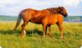 Жеребость и выжеребка кобылы (беременность и роды лошади)