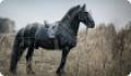 Снаряжение для фиксации лошади