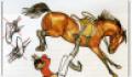 Техника безопасности при работе с лошадьми и правила поведения в конюшне