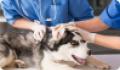 Ветеринарная служба в Москве и вызов ветеринара на дом