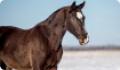 Советы по выбору лошади. Оценка качеств лошади и места ее содержания