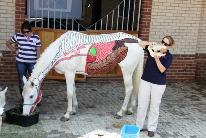 Анатомия и физиология лошади